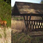 Jagtejendom med kronvildt
